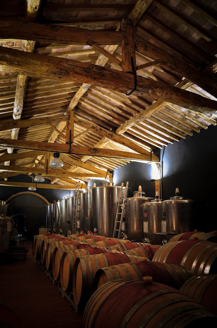 Educational tour in our Cellar