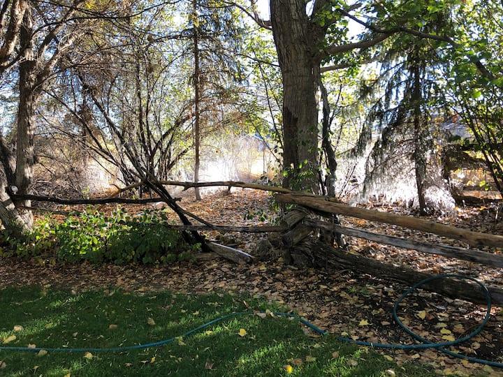 Walk along woodsy trails
