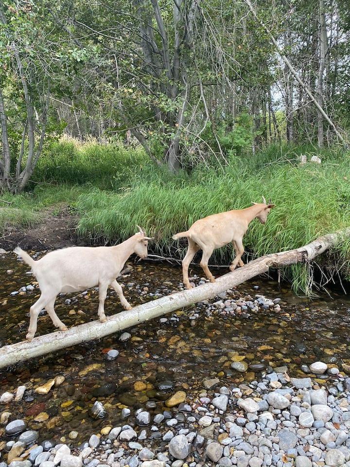 Amazing balance! Cottonwood Creek