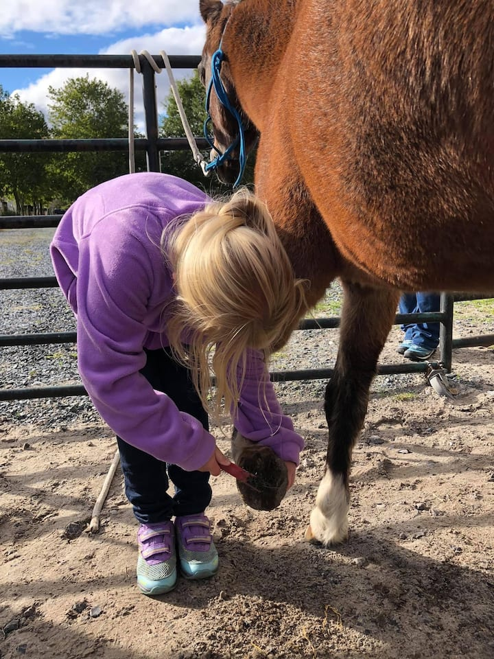 Learn how to clean a horses hoof