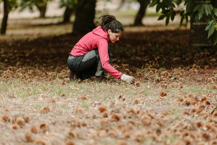 Autumn is chestnut time