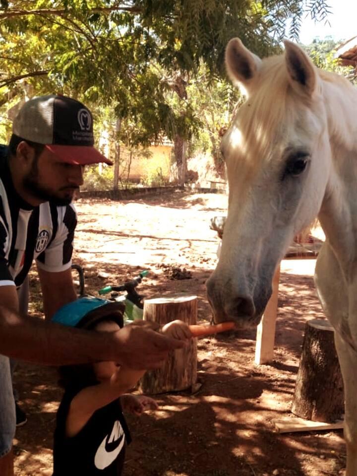 Alimentando os cavalos com cenouras