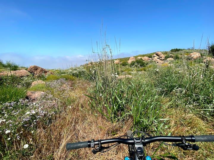 Trail Blazing