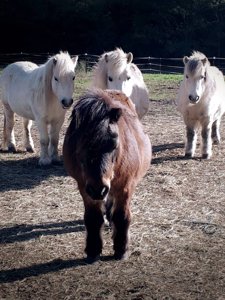 Lorien and his friends love to play and show off how clever they are!