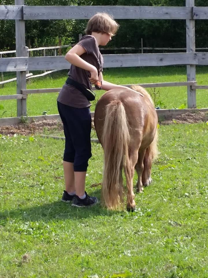 Sie lernen,wie man ein Pferd vorbereitet
