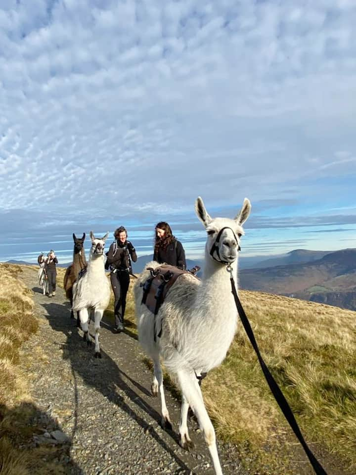 Our boys love to trek