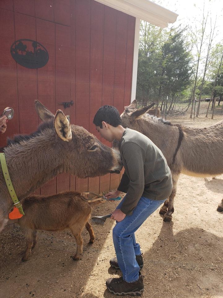Brushing the goats and donkeys!