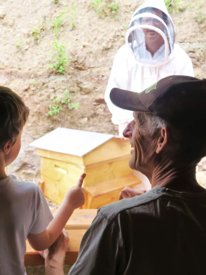 Discovery live of a beehive's life ...