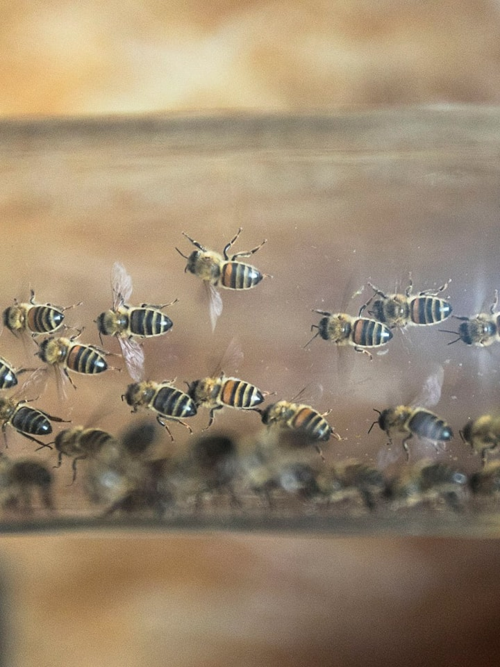 Bees ventilating, entry of glass hive
