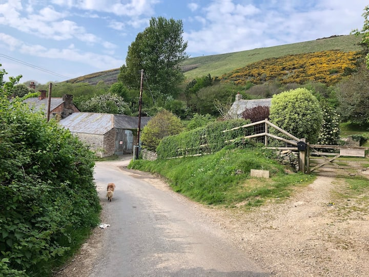 One of the Purbeck farms on our walk