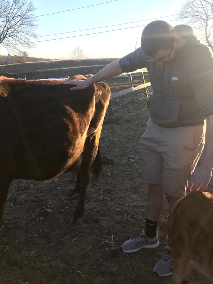 guest petting Fawn, our dairy cow