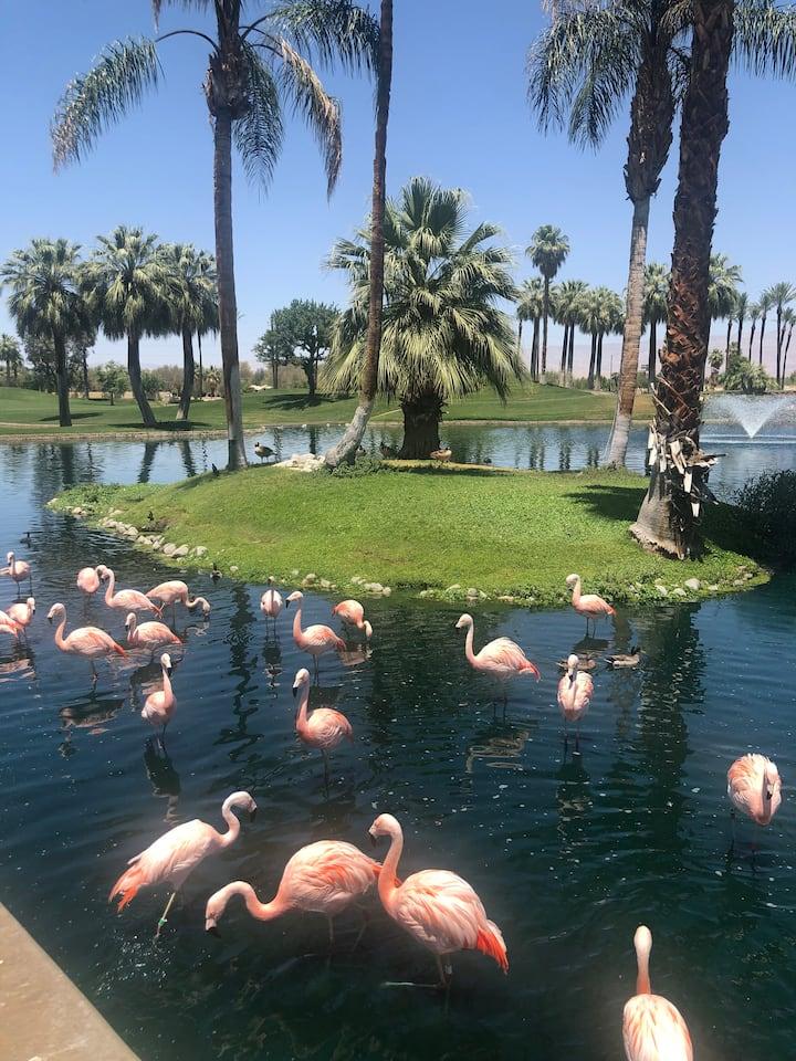 Flamingo Sanctuary