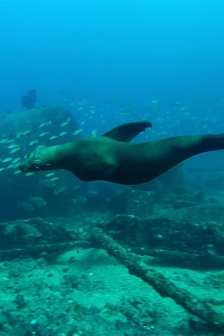Sea Lion on the wreck