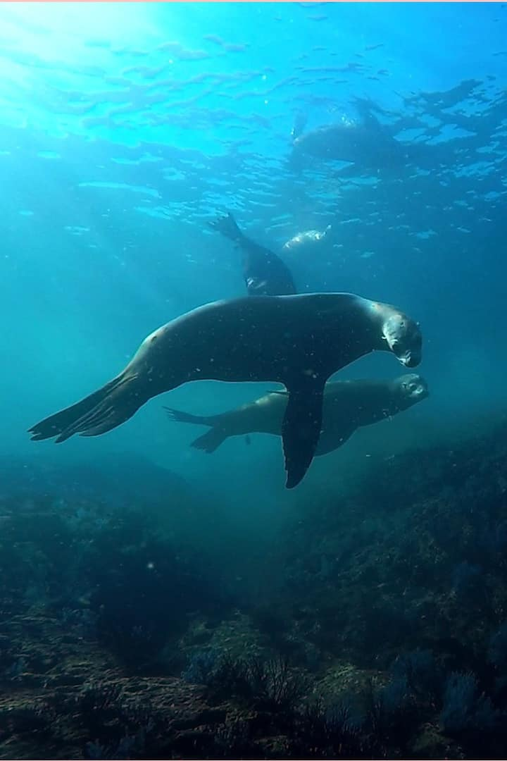 Sea Lions at La Reina - all year