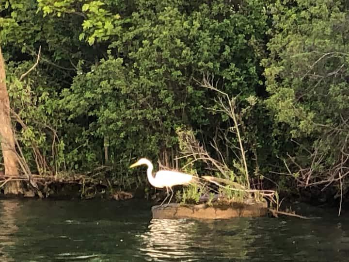 Herons, egrets, geese & more!