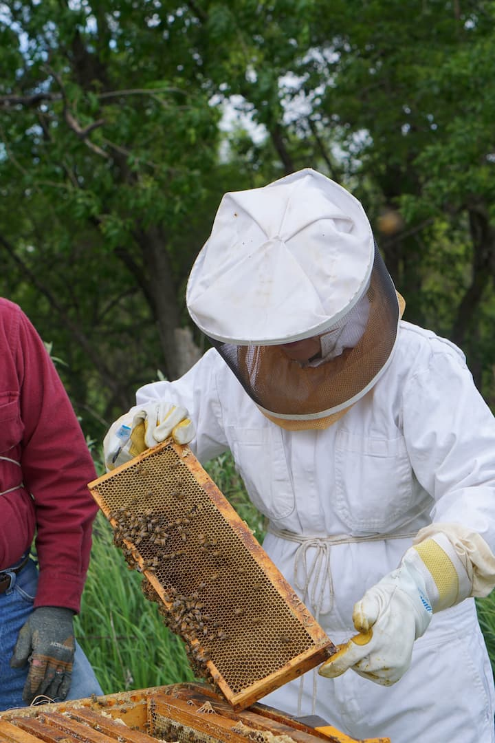 A guest inspecting a beehive