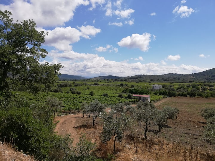 You can see olive grove and Vineyard
