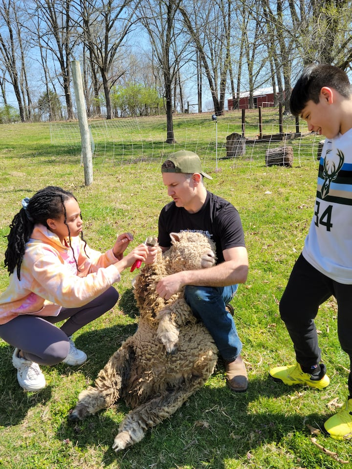 Learning to trim Sheep Hooves