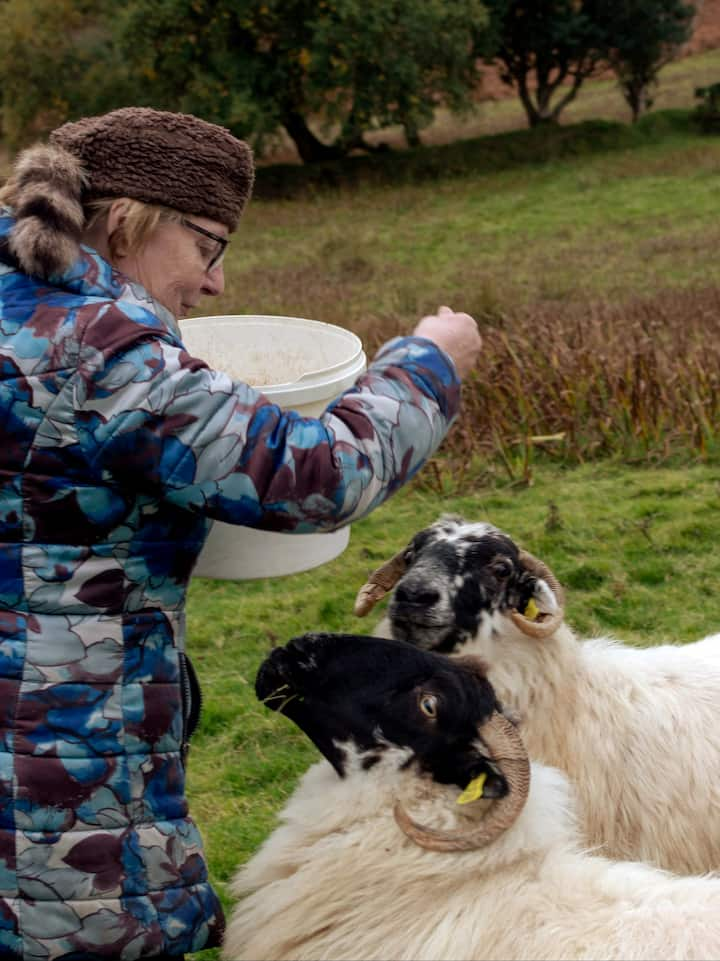 Feeding my pet sheep