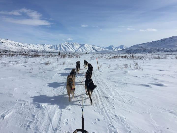 Running the Iditarod trail
