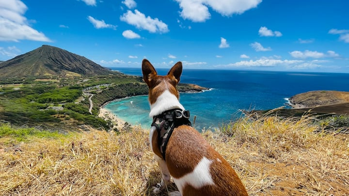 Woof! What a view from the hike!