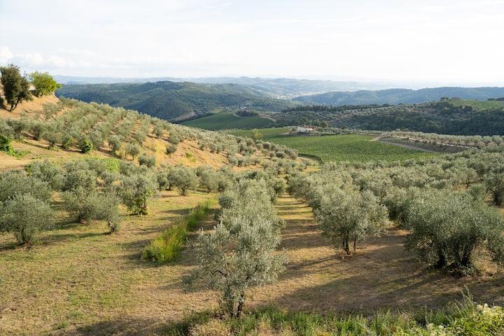 Scorcio di ulivi
