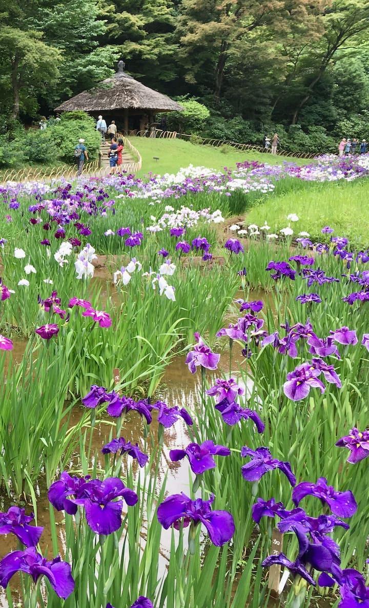A Garden in Meiji-jingu
