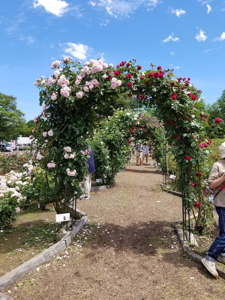 Rose garden and guests