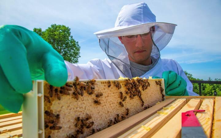 Full capped frame of Honey