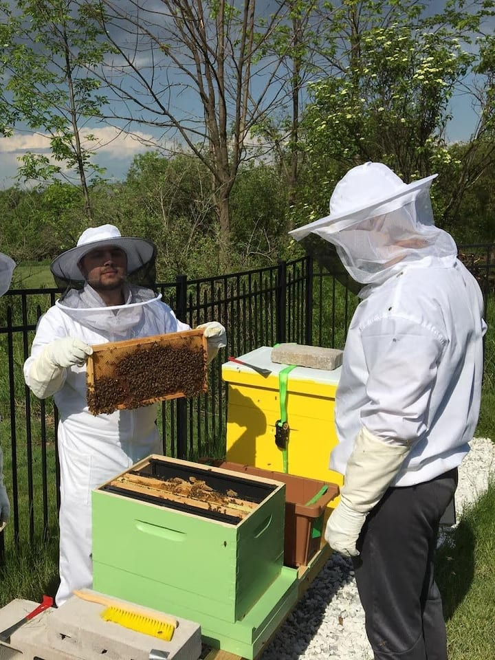 Hive Frame Inspection