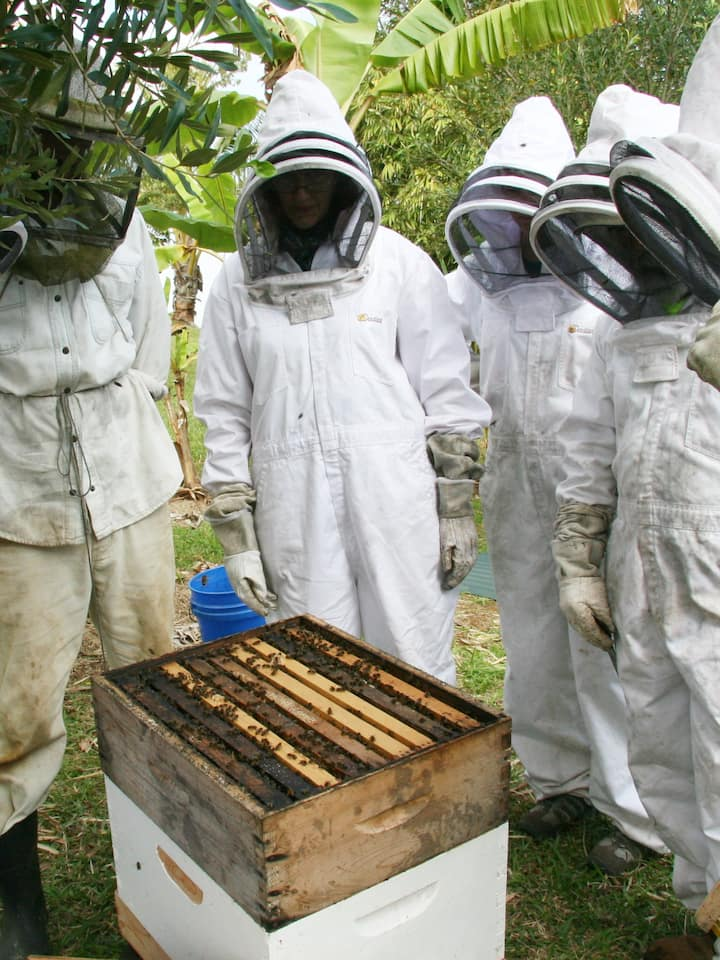 You will open up a bee hive