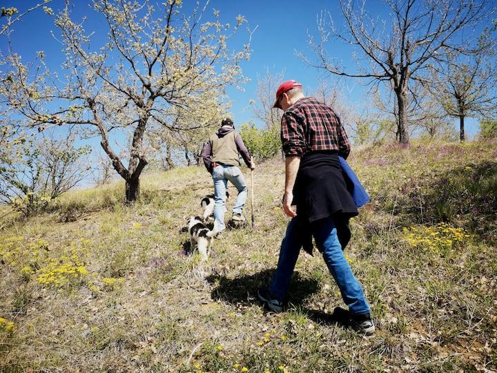 Truffle hunt in Abruzzo National Park