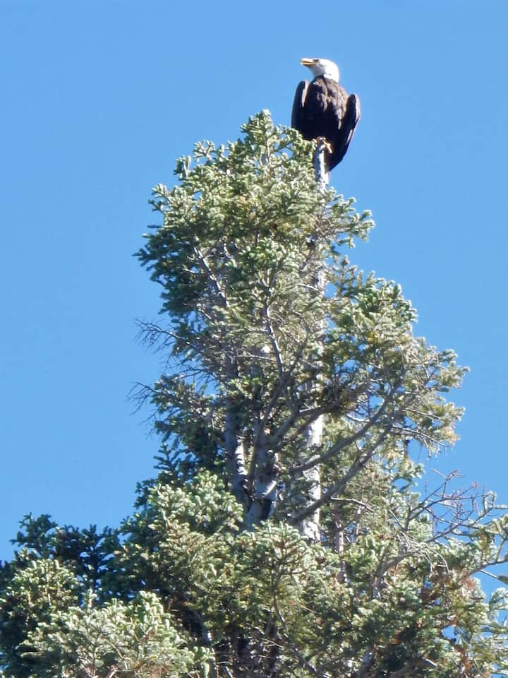 Bald Eagles and Osprey oversee and fish the lake!