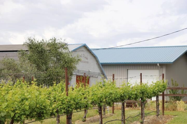 Secret Ravine Vineyard  (My favorite)