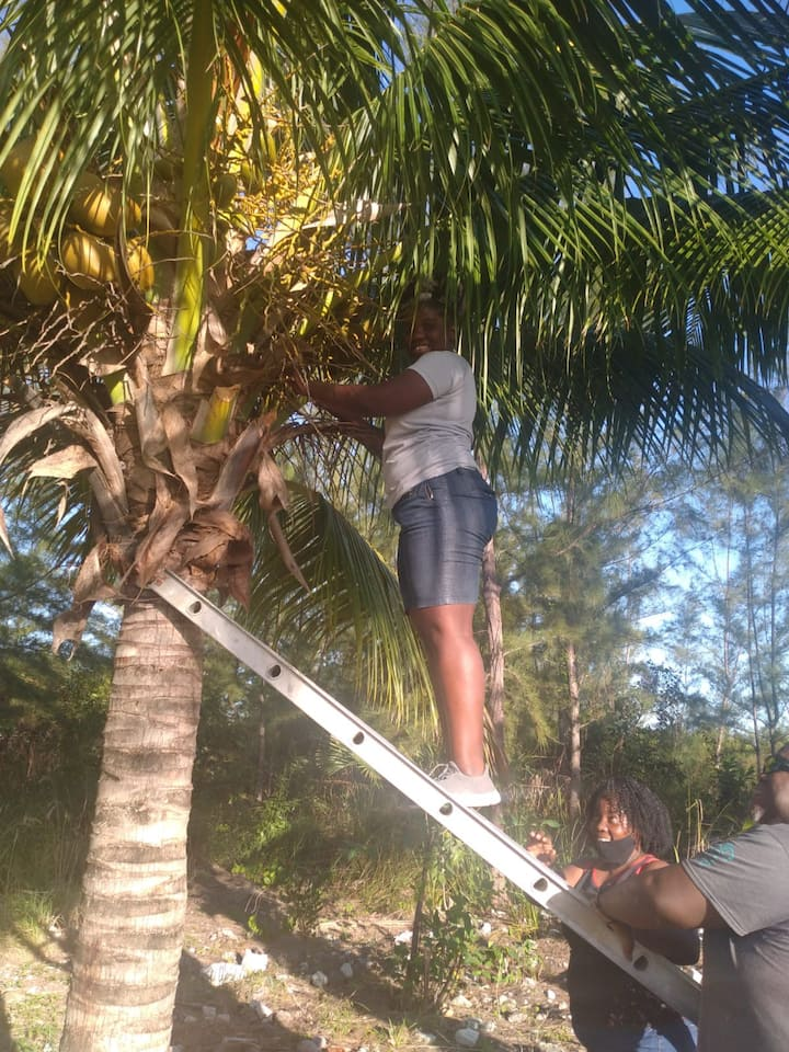 Guest picking coconut to make  drink