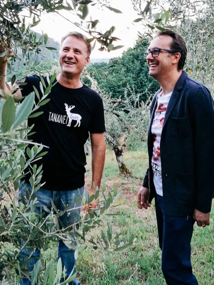 A walk through the olive grow