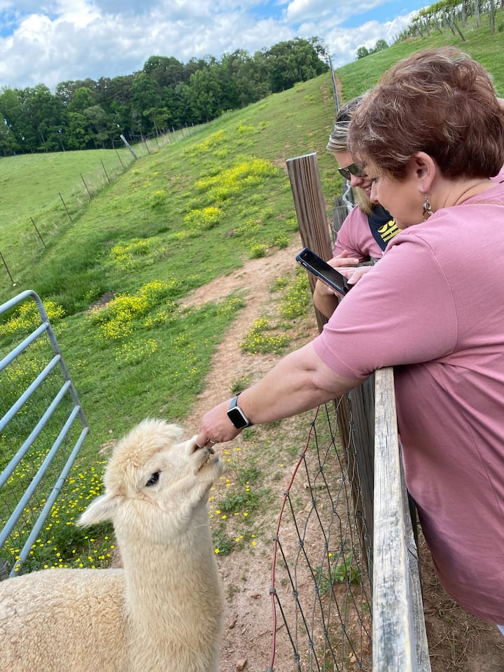 Pictured is one of our guests feeding the alpacas at Cavender Creek Winery