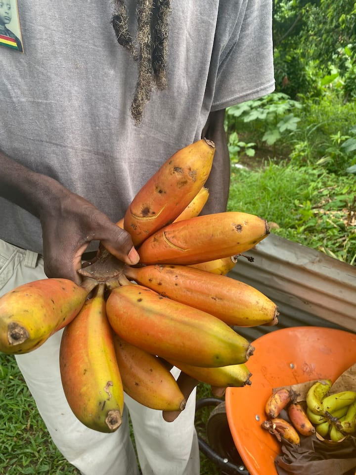 Brimstone banana