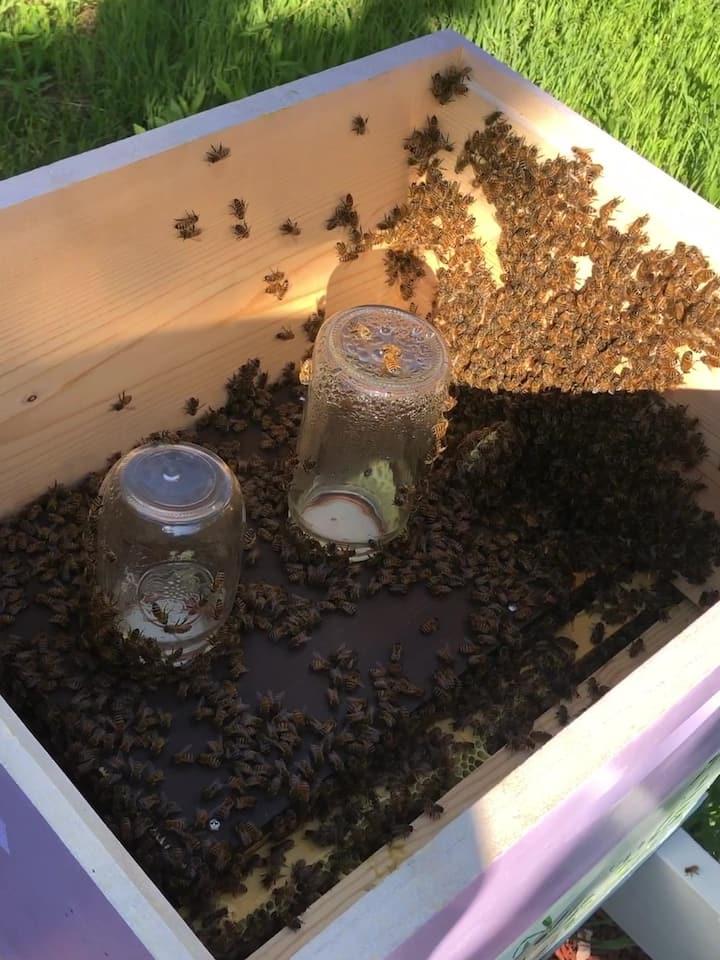 A  peek inside the hive.