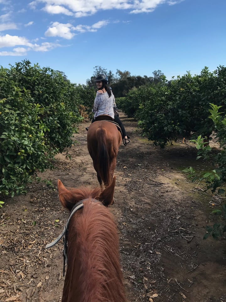 Riding through the lemon grove