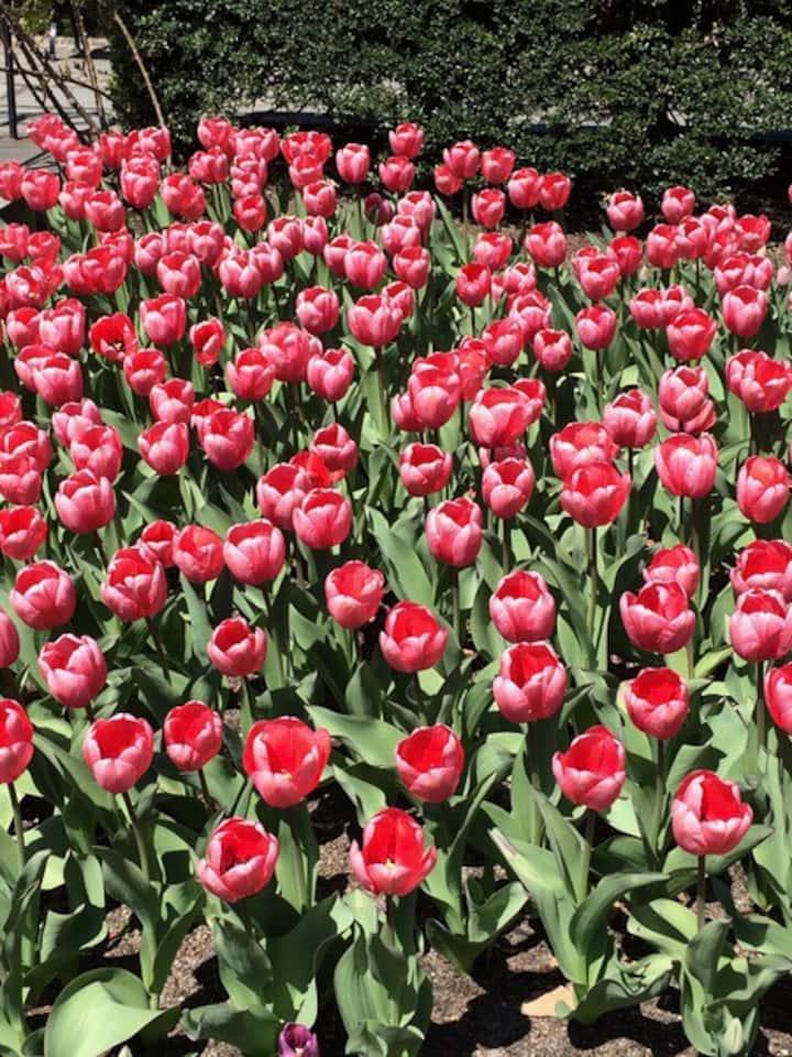 Spring in Conservatory Garden.