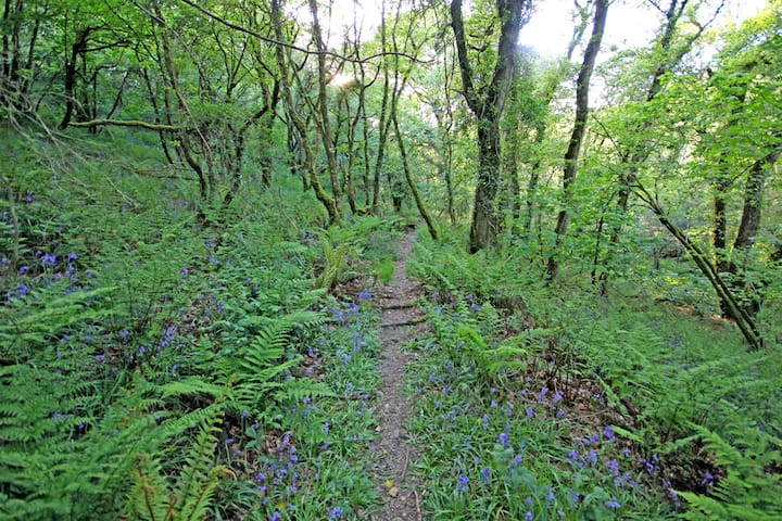 In spring bluebells carpet the valley