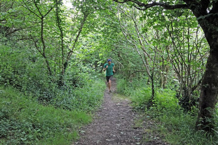 Run through gorgeous woodland trails
