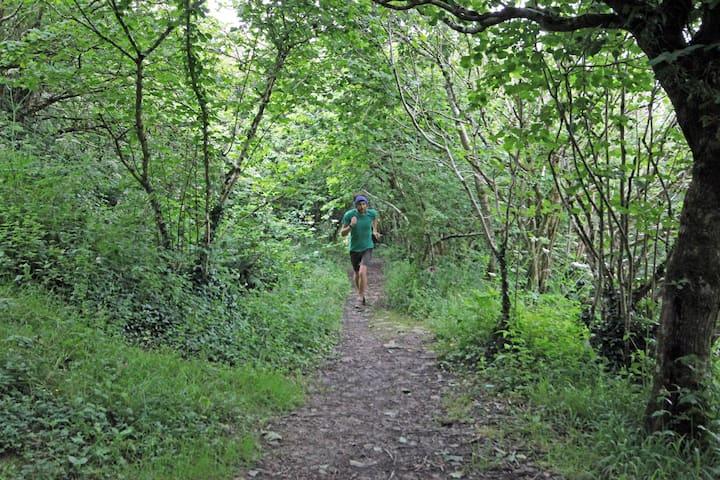 Run through gorgeous woodland trails