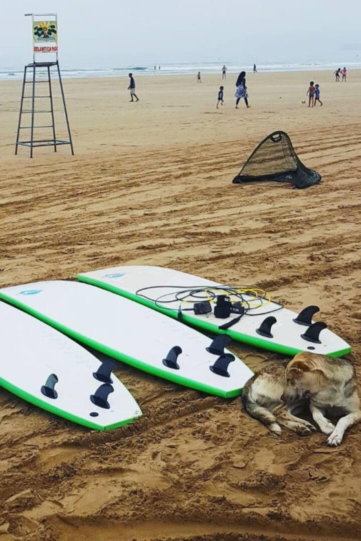 Surf Board/Soft Board