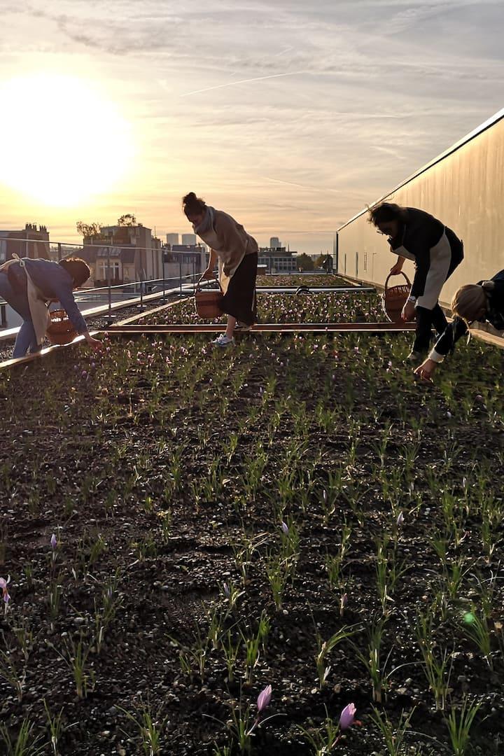 La récolte