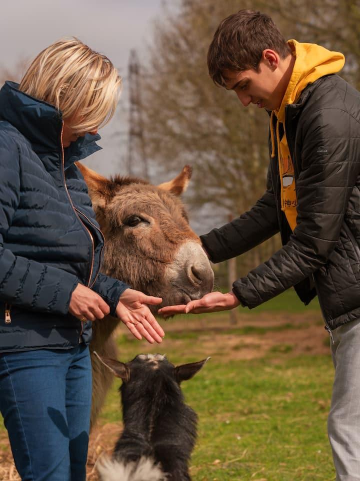 Petit coucou aux ânes