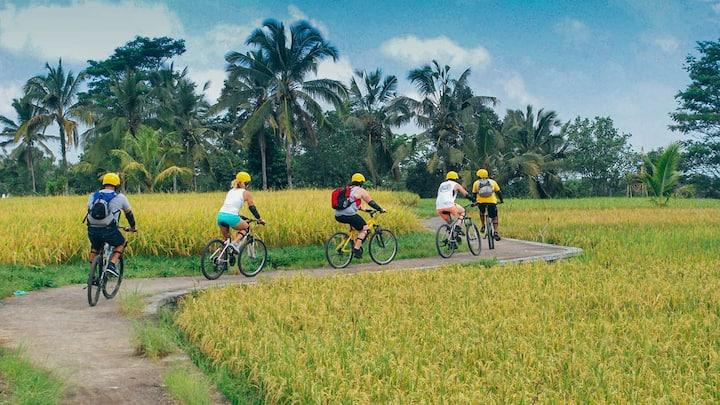 Cycling on rice paddies