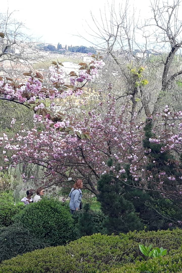 The Japanese cherry