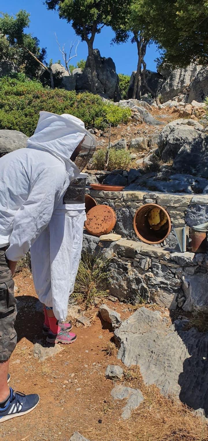 Examining Minoan bee hives